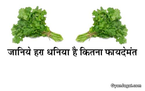 Green Coriander Benefits Dhaniya Ke Fayde in Hindi